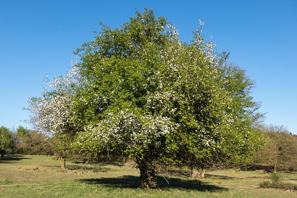 Élagage des arbres fruitiers : Tout savoir
