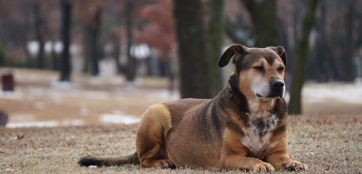 Vermifuger son chien : pourquoi et comment ?