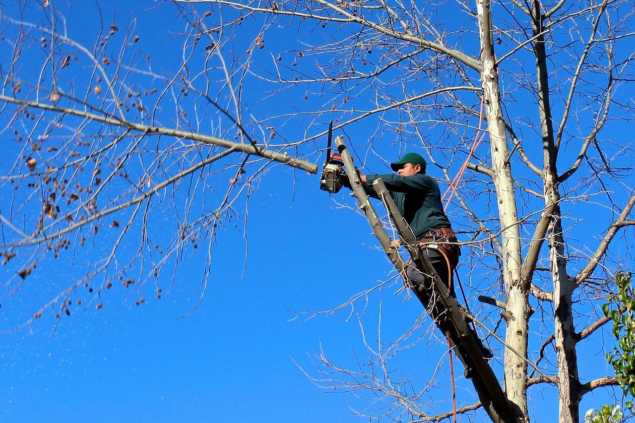Les 4 bonnes raisons d'élaguer un arbre