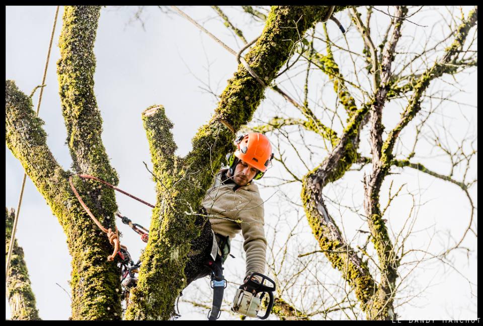 Faut-il débarrasser l'arbre des mousses et des lichens sur son tronc?
