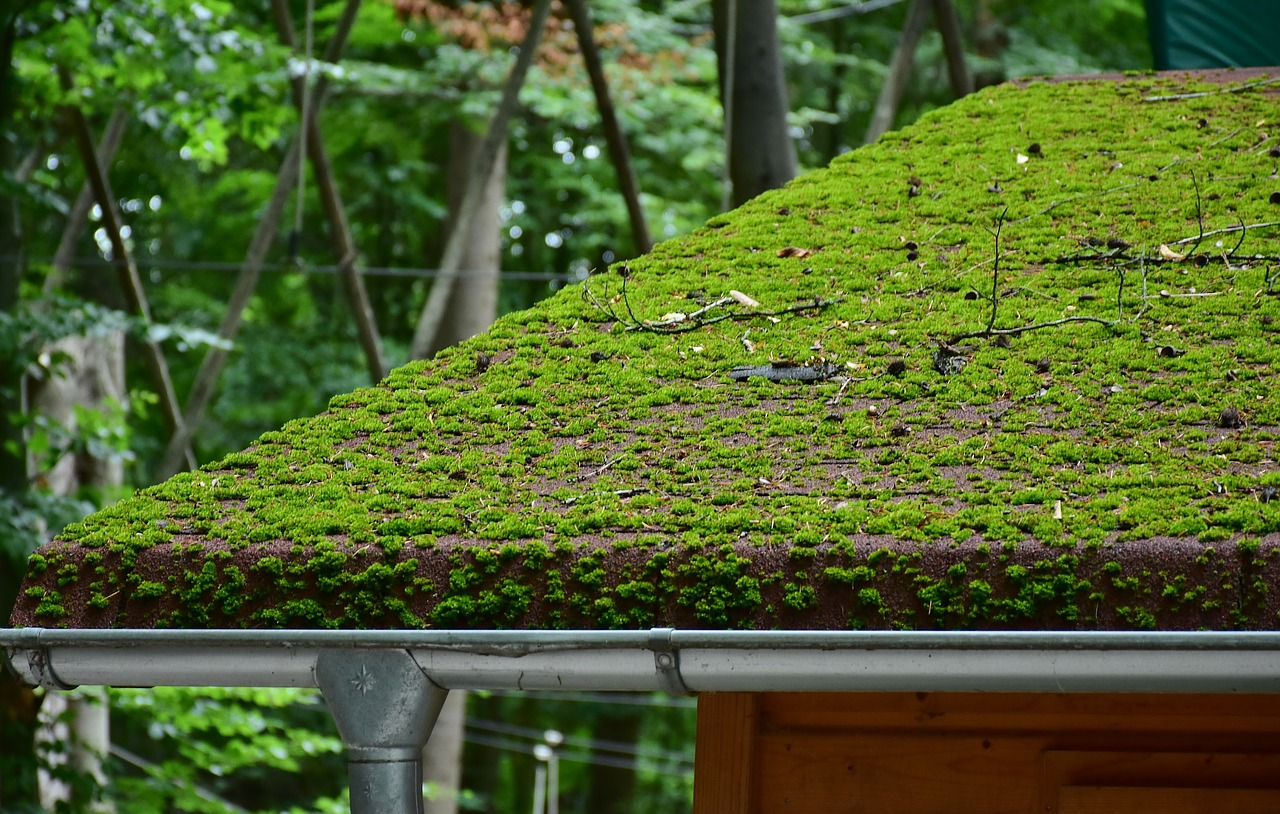 Comment stopper l'expansion des mousses et des lichens sur sa toiture?