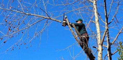 L'émondage d'arbre : une notion à retenir