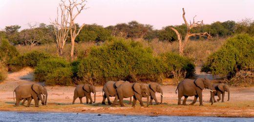 Les infos à savoir avant de partir en voyage safari au Kenya