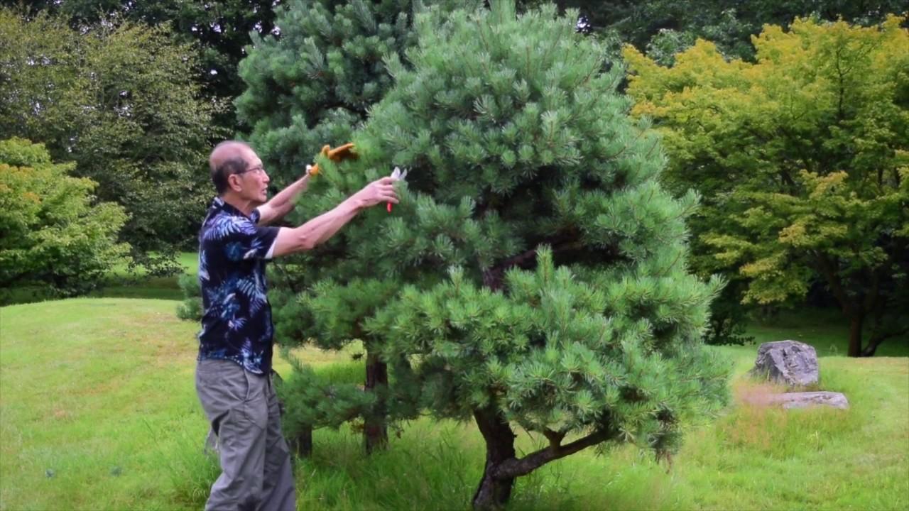 Tailler les arbres : les conseils utiles pour obtenir de bons résultats