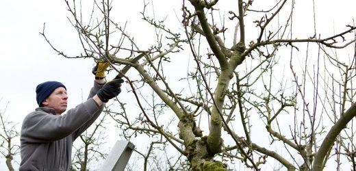 Entretien des arbres en hiver : quelles actions à mettre en œuvre?