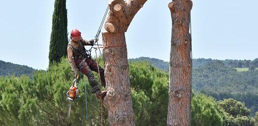 Élagage des arbres : les questions à se poser